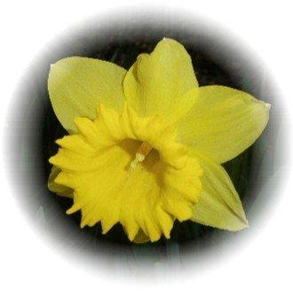 fleurseule10.jpg
