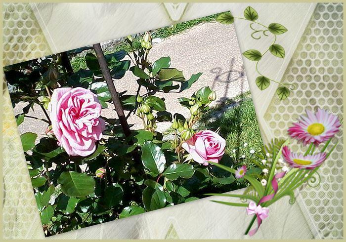 Montage 1 bis roseraie