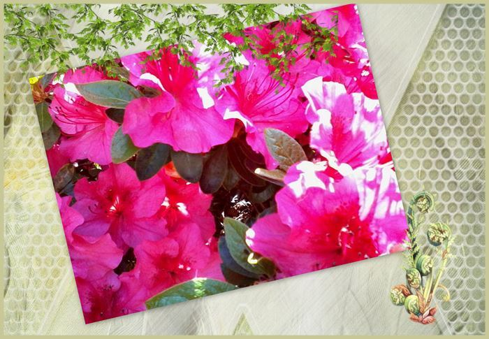 Montage 4 bis roseraie