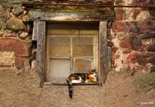 chat 5 pour blog